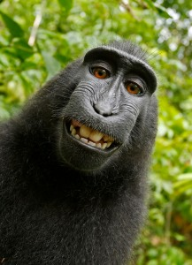 David Slater: Crested Black Macaque © David J. Slater